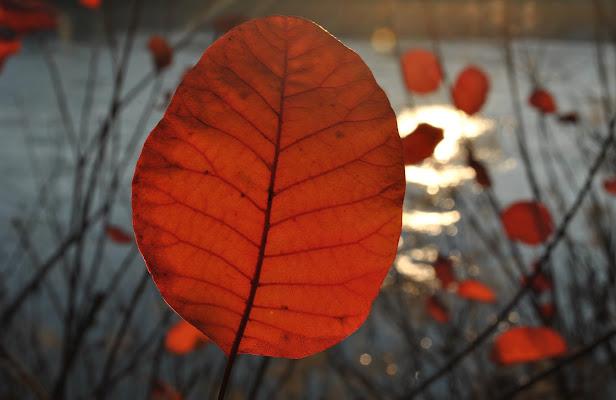 leaving leaves di Morghy