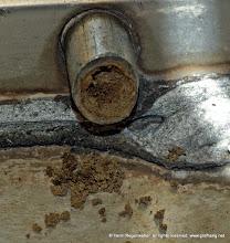 Photo: Warum das Insekt diese Brutstätte öffnet ist nicht geklärt