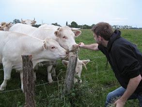 Photo: Avondwandeling met koeien