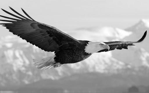 Eagle Pack 2 Live Wallpaper