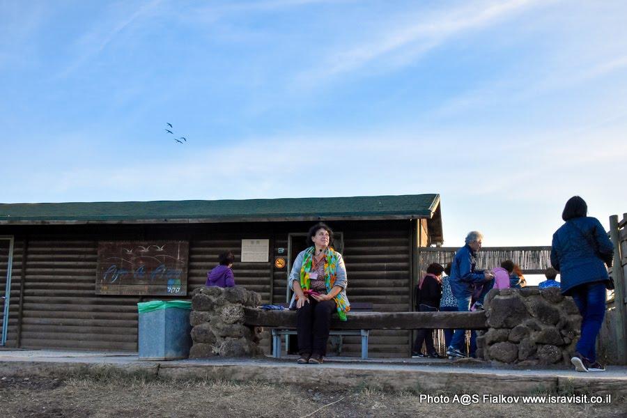 Орнитологическая станция наблюдения птиц на озере Хула в национальном заповеднике птиц. Израиль. Гид Светлана Фиалкова.