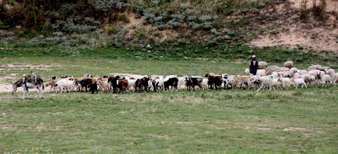 Photo: Day 99 - Herder with Donkey, Goats, Dog and Sheep