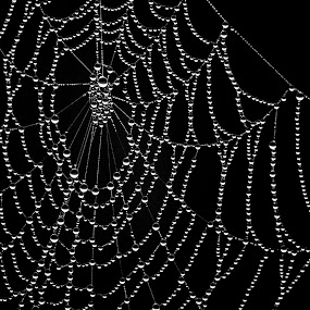 Natures jewels by Karen Buttery - Nature Up Close Natural Waterdrops ( abstract, black background, cobweb, nature, black and white, waterdrops )