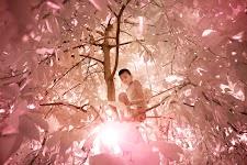tegenlichtopname van jongetje in boom, waarbij alles rose-bruin gekleurd is