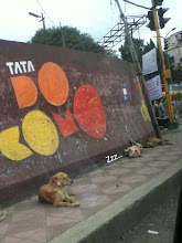 Photo: Have you ever thought of what dogs in Pune dream about? They often look very relaxed, and that make me smile :) This doggy I saw near Sangamwadi Bridge abouttwo weeks ago. 13th August updated -http://jp.asksiddhi.in/daily_detail.php?id=269