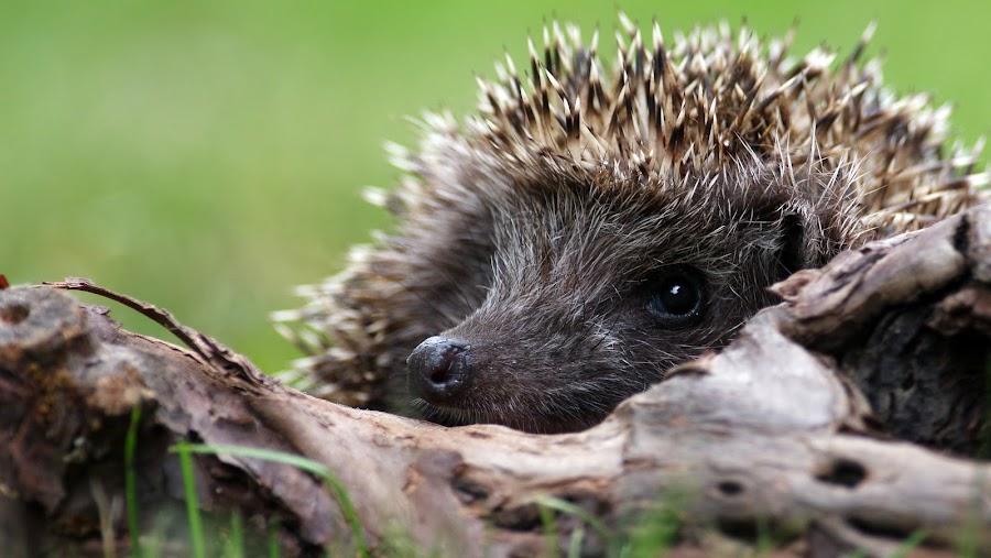 by Zeljko Padavic - Animals Other Mammals (  )