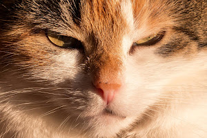 allergies-traitement-nettoyage-pressing-baleo