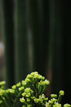 Photo: goodnight friends... #flowerphotography