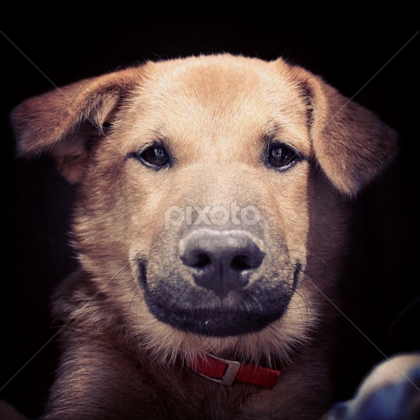 Doggie in the dark by Raul Cano - Animals - Dogs Portraits ( face, puppy, smile, dog, portrait )