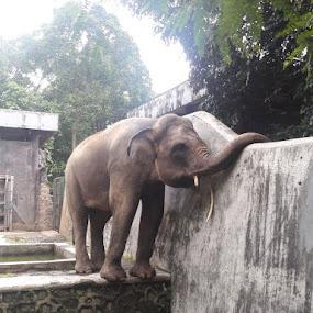 3 by Esterlin Wau - Animals Other ( zoo, elephant, animal )