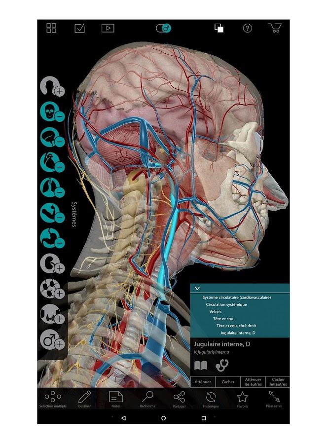 """Résultat de recherche d'images pour """"Atlas d'Anatomie humaine édition 2018"""""""