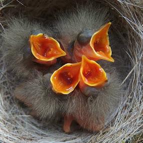 The nest by Jana Černošková - Animals Birds ( bird, risers, nest,  )