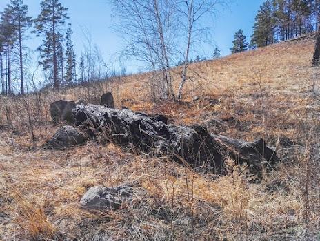 Остатки ствола крупного дерева после лесных пожаров