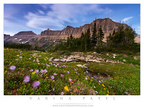 Photo: Long Exposure in Windy Conditions  Do you find yourself packing it in when conditions aren't optimal? Or do you see difficult conditions as a personal challenge?  After shooting the sunset at Logan Pass in Glacier National Park, I took one last shot. The light was fading fast and it was awfully windy - but those conditions would work in my favor if I could create the image I wanted.  So, I set up my tripod low to the ground, framing my shot so that I was really close to the pretty purple and yellow flowers that dotted the hillside. I guessed that I needed about fifteen seconds to get the effect I wanted, so I chose my camera settings accordingly... f/11, 15 seconds, ISO 100). I made sure my ND Grad filter was adjusted appropriately to help even out the exposure. And then I stood back and waited while my shutter was open.  The fading light meant I needed that long shutter speed - and the high winds ensured that a long shutter speed would blur anything that moved while the shutter was open. Fifteen seconds was just right to blur the colorful flowers, and get a bit of motion in the clouds. My concern was that I'd end up with too much blur... and I wanted to be sure that you can tell those are flower in the foreground. My shutter speed selection ended up being just right. Just enough blur to produce an interesting effect - and not so much that you can't tell they are flowers. To me, the scene feels like something out of a story book.  I always enjoy playing with the conditions I have at hand. Rather than seeing the wind as an obstacle - or the fading light as a problem - why not take those conditions and turn them into tools... something you can use to create a better photograph? Rise to the challenge!