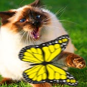 Cat Games - Butterflies