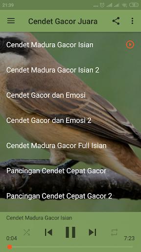 Suara Burung Cendet Juara : suara, burung, cendet, juara, Masteran, Suara, Burung, Cendet, Isian, Juara, Download, Android, APKtume.com