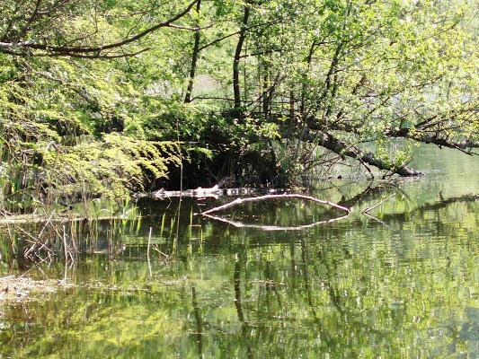 Lago di Monticchio di marco_de_giosa