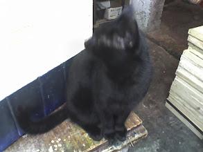 Photo: kot towarzysz człowieka  Ciag dalszy nastapi