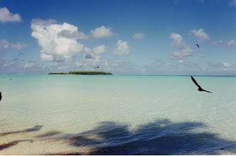 Photo: #024-Tetiaroa, l'île aux oiseaux