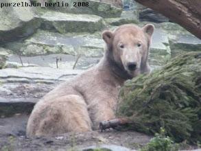 Photo: Ein nettes Spielzeug, meint Knut ;-)