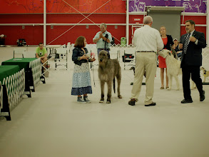 Photo: 4-28-2014 Franky with Zion for Irish Wolfhound Club of America Juniors Competition - Wins Best Junior