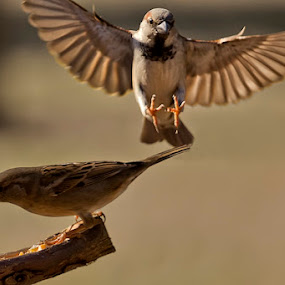 This is my food!! by Mariano Rodríguez Galíndez - Animals Birds