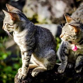 Kitt&kitts by Rizal Pungus - Animals - Cats Kittens