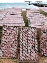 Photo: squid-drying cottage business along the coast in Pranburi