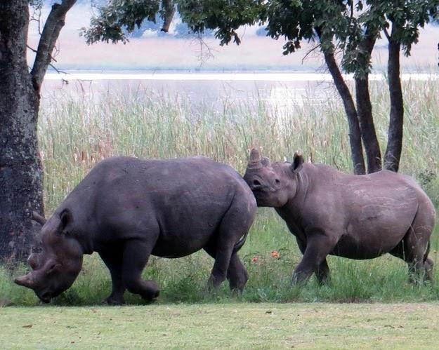 SB Rhino3
