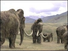 Photo: Care to kill an elephant/mammoth with a stone spear?  Takes some planning and expertise.