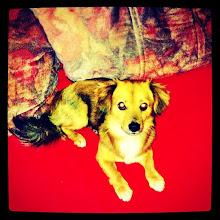Photo: Pet portrait - red carpet #intercer #pet - via Instagram, http://instagr.am/p/LAeCLrpfvm/