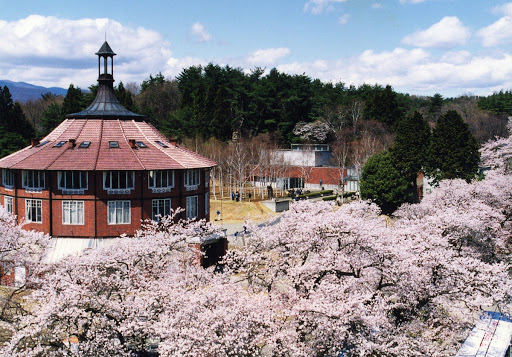 Sakura trees and La Ruche