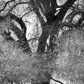 by Sarah Hart - Nature Up Close Trees & Bushes