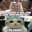 Imagens de gatinhos engraçados icon