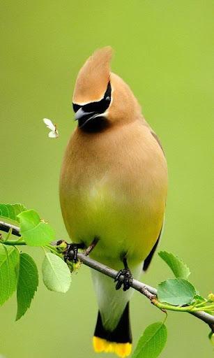 玩免費個人化APP|下載Bird Live Wallperpers app不用錢|硬是要APP