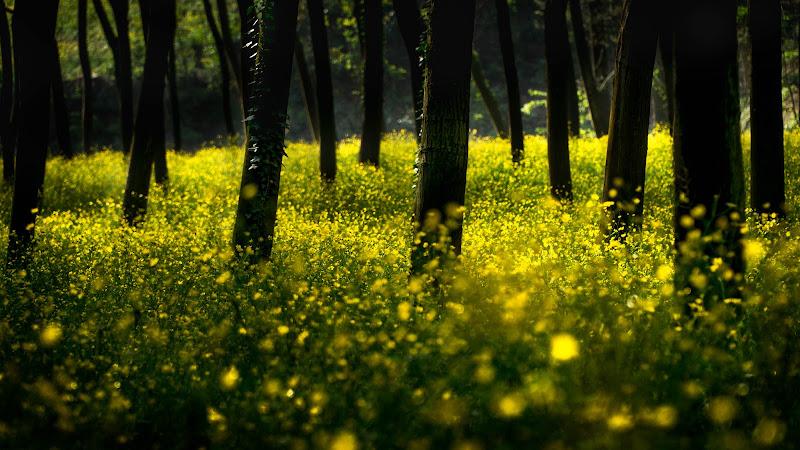 Il bosco giallo di aliscaforotto