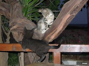 Photo: něco na těch hrajících si koťatech je....