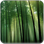 Bamboo Wallpapers Sakti