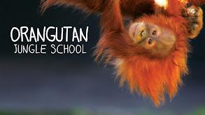 Orangutan Jungle School thumbnail