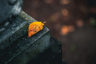 Photo: Early Fallen  In a quiet corner of a small shrine, evidence that summer is on its way out. Autumn is almost here.  Blog post: http://lestaylorphoto.com/autumn-is-on-the-way/  #japan #autumn #fall #nikond610