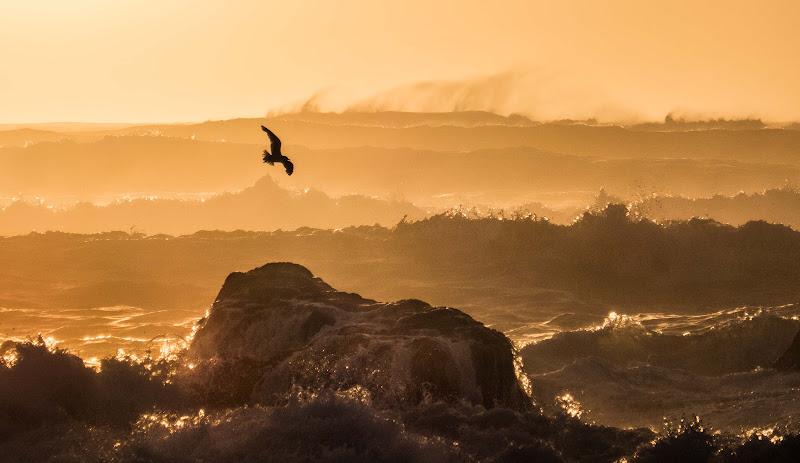 Volo su mare in burrasca di ilariucci