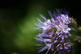 Photo: #flowers  #floralfriday  #flowerphotography