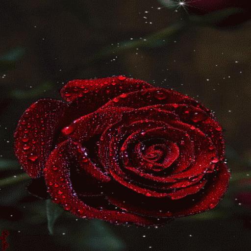 Red Rose Magic LWP 個人化 App LOGO-APP開箱王