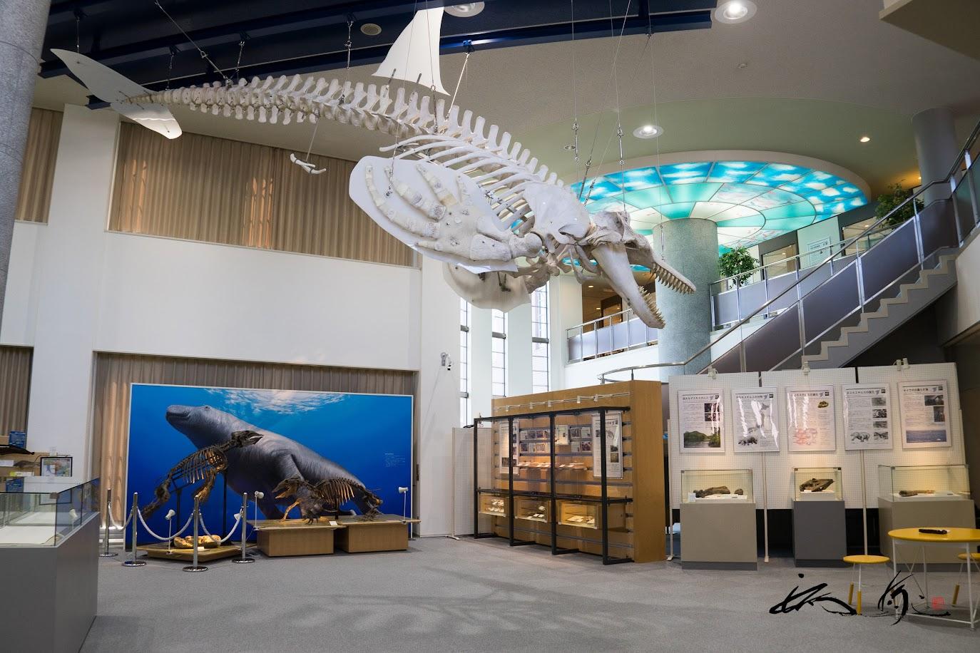 シェチ骨格標本(自然系展示室)
