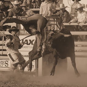 Canberra Rodeo by Anthony Rutter - Novices Only Sports