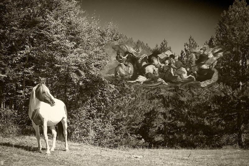pensieri in libertà... di un cavallo e delle sue battaglie di un tempo di lugiube