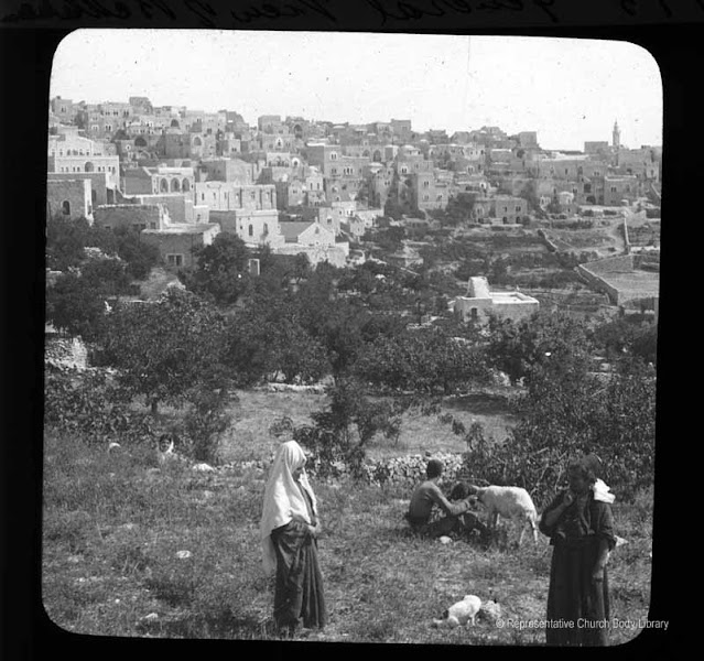 Photo: 'General view of Bethlehem' [with locals in the foreground attending their goats in olive field]