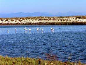 Photo: Flamingos bij Santa Mavra.