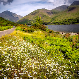 Wast Water by James Johnstone - Landscapes Waterscapes ( lake district, flowers, daisies, wast water, waterscape, wastwater, landscape,  )