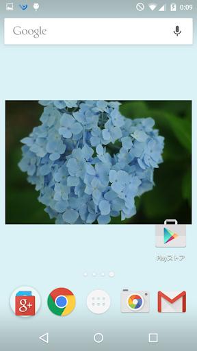 あじさい壁紙 人気の紫陽花 無料版FREE